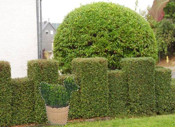 1000 images about garten buchsbaum on pinterest for Cooledeko de